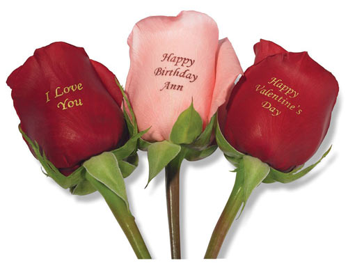 Valentines_day_roses